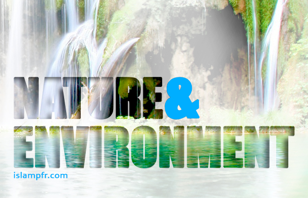 Hadith and Narrations on Nature and the Environment